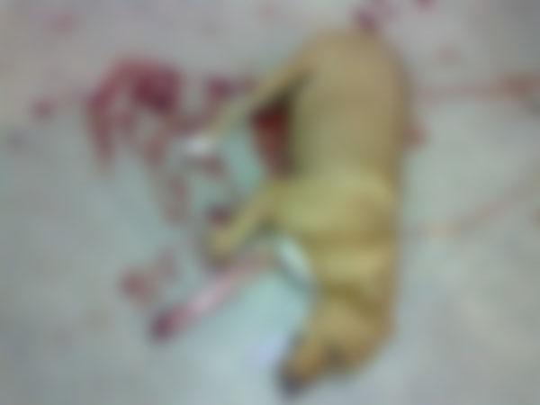El perro fue linchado a machetazos por vecinos y después muerto de cinco balazos por agentes de la Policía Municipal. [FOTO: Archivo]