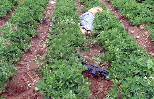 El cuerpo del joven quedó tendido dentro de un predio agrícola al intentar huír después de agredir con un arma larga a los elementos policiacos.