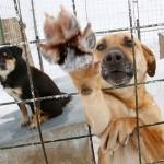 #MEOQUI: Solicita ayuda el Comité del Centro de Control Canino para su proyecto