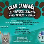 ? Realizarán Gran Campaña de Esterilización para Perros y Gatos en Meoqui