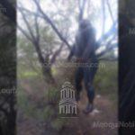 😟 Localizan a mujer suspendida de un mezquite en Meoqui
