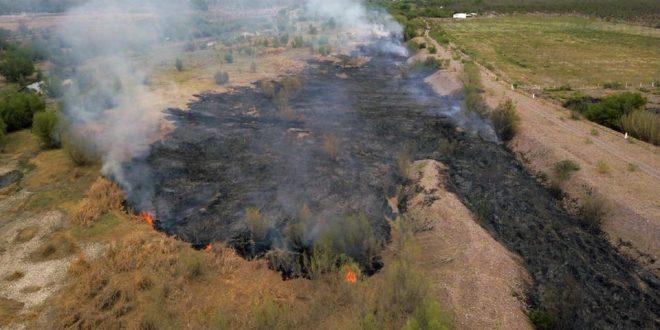 Ecocidio: incendian gran parte de la vegetación del río San Pedro en Meoqui